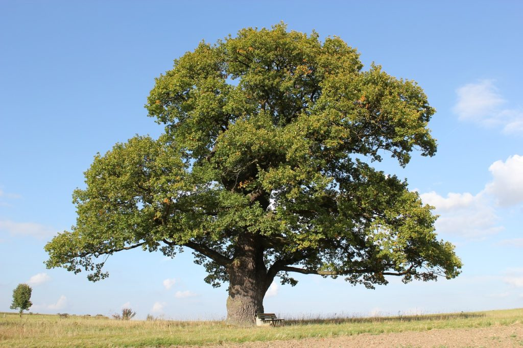 What is your Budget? Image of mighty oak tree proving that big things grow out of small beginnings